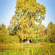 The Big Autumn Poplar Poster