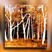 The Birches Poster