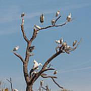 The Bird Tree Poster