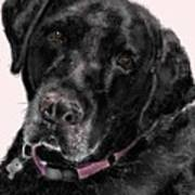 The Black Lab Sweetheart Poster