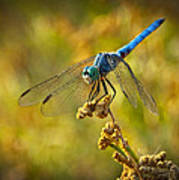 The Blue Dragonfly  Poster