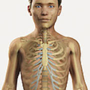 The Bones Within The Body Pre-adolescent Poster