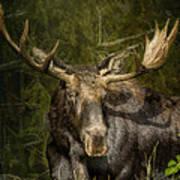 The Bull Moose Poster