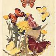 The Butterfly Book Poster