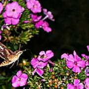 The Butterfly Garden At Night Poster