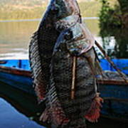 The Catch - Begnas Lake - Nepal Poster