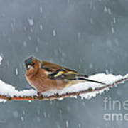 The Chaffinch Poster