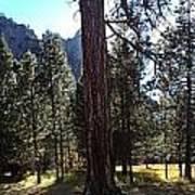 The Chapel Yosemite Poster