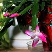 The Christmas Cactus Poster