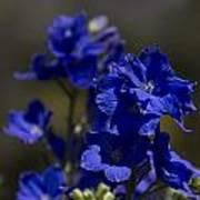 The Color Blue V6 Poster
