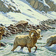 The Crossing - Bighorn Poster