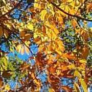 The Dazzling Colors Of Fall Poster