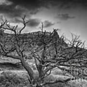 The Dead Pinion Tree Hdr Bw Poster