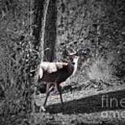 The Deer Poster