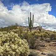 The Desert Southwest Poster