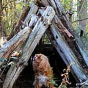 The Dog In The Teepee Poster
