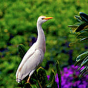 The Egret Outside My Window Poster