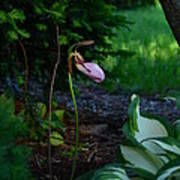 The Elusive Lady Slipper Lll Poster