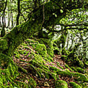 The Elven Forest No2 Wide Poster
