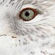 The Eye Of The Gull Poster
