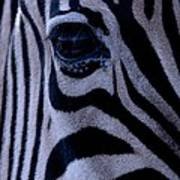 The Eye Of The Zebra Poster