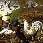 The Fable Of The Raven With A Peacock, Cockerel, Woodpecker, Jay, Woodcock, And Magpie Poster