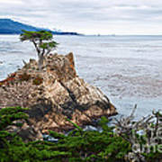 The Famous Lone Cypress Tree At Pebble Beach In Monterey California Poster