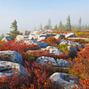 The Fog Clears At Dolly Sods Poster