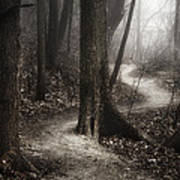 The Foggy Path Poster by Scott Norris