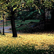 The Golden Gingko Path Poster