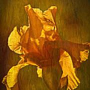The Golden Iris Poster