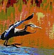 The Great Blue Heron Jumps To Flight Poster