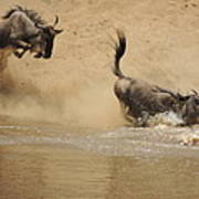 The Great Migration Wildebeest Crossing Poster