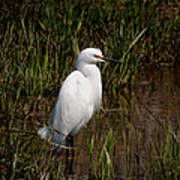 The Great White Heron Poster