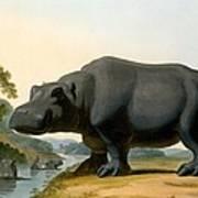 The Hippopotamus, 1804 Poster