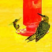 The Humming Bird And Gila Woodpecker Poster