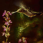 The Hummingbird Digital Art Poster