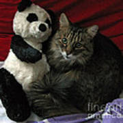 The King Kitty And Panda 01 Poster