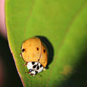 The Lady Bug Poster