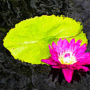 The Lily Pad And Flower... Poster