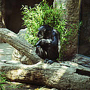 The Lone Chimp Poster