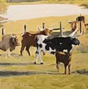 The Longhorn Cows Poster
