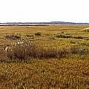 The Marsh At Cape Henlopen Poster