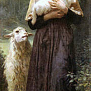 The Newborn Lamb Poster