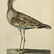 The Norfolk Plover Poster