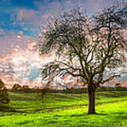 The Old Apple Tree At Dawn Poster
