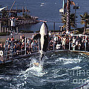 The Original Shamu Orca Sea World San Diego 1967 Poster