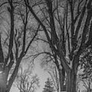 The Park In Black And White Poster