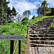 The Pilgrims' Steps Poster