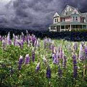 The Pink House In The Lupine Poster